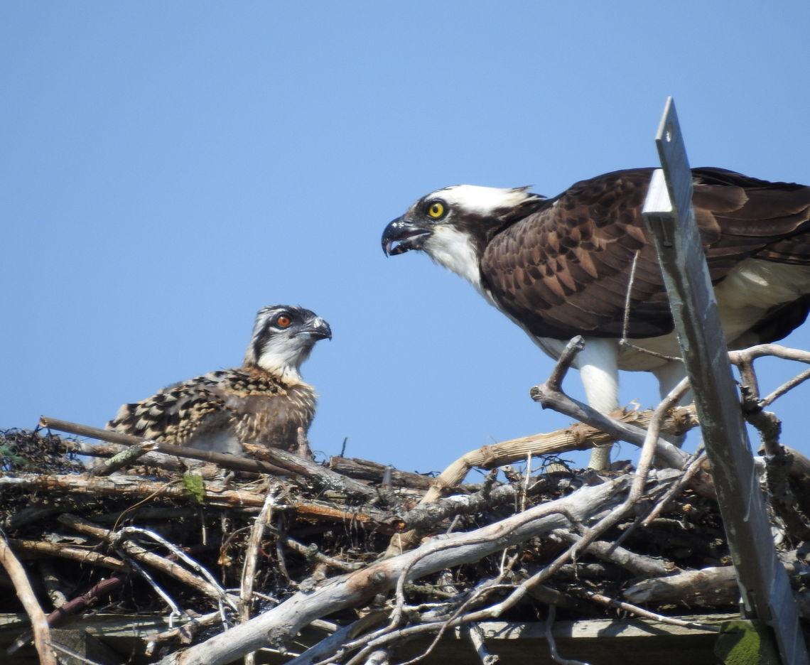 MIGRATORY BIRD TREATY ACT UPDATES