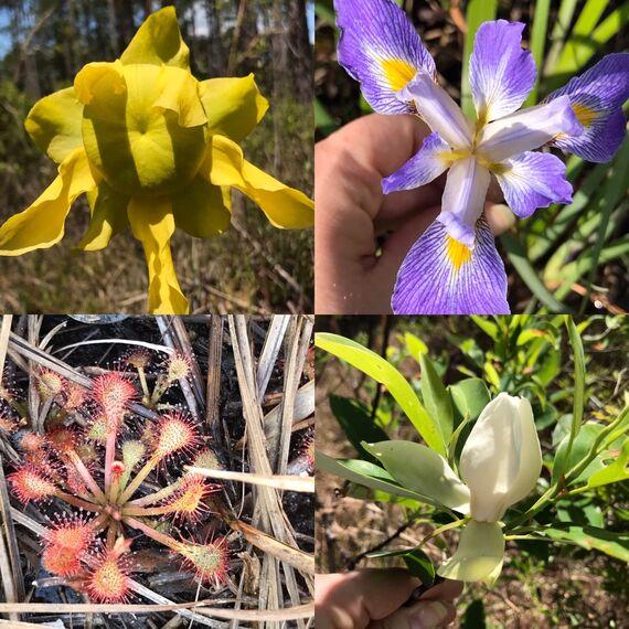 fmnf plants