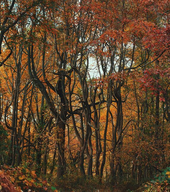 fall foliage jerome eno