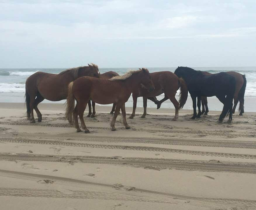 McCORMICK TAYLOR SUPPORTS COROLLA WILD HORSE FUND
