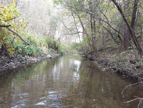 3 1springcreek perennial stream